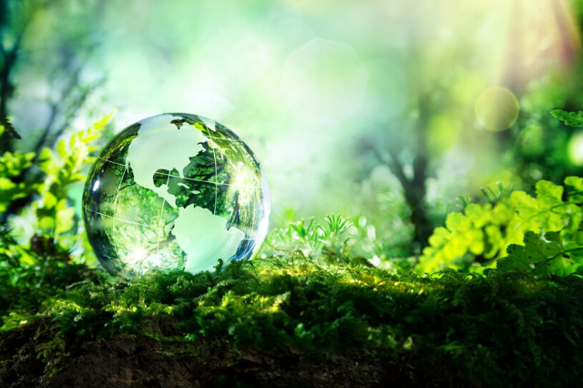 An Insight on Sustainability and Its Lasting Essence